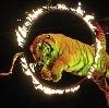 Цирки в Добрянке